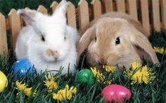 Happy Easter Images Wallpapers Greetings Status For Whatsapp Easter Bunny Wallpaper for Laptop Related Easter Pictures Free, Easter Bunny Pictures, Cute Easter Bunny, Hoppy Easter, Easter Hunt, Easter Peeps, Rabbit Wallpaper, Tier Wallpaper, Animal Wallpaper