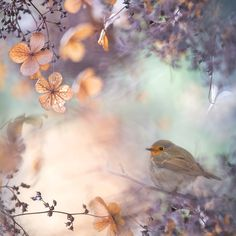 Hydrangea fantasy by Teuni Stevense on 500px