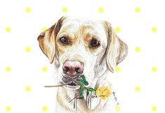 Single Luxury Long Labrador Christmas Card Gift//Present Dog Lab