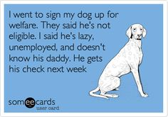 I went to sign my dog up for welfare. They said he's not eligible. I said he's lazy, unemployed, and doesn't know his daddy. He gets his check next week.