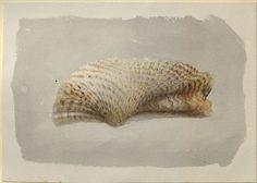 Ruskin, John - Study of a Shell