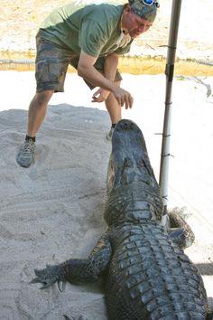 Florida Gator Boys; by Brenda Gartin, Romance Author  http://www.brendagartin.com/