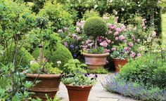 Want to do the potted tree and just love the romantic charm of this space, Container Plants, Container Gardening, Potted Trees, Potted Plants, Garden Planner, Spring Bulbs, Pink Garden, Gardening Books, Enchanted Garden