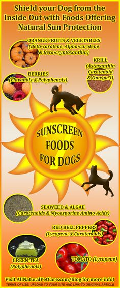 Natural Sunscreen Foods for Dogs (Infographic).  For the full quality image, visit http://allnaturalpetcare.com/blog/2014/05/20/natural-sunscreen-foods-dogs-infographic/ .