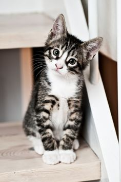 Beautiful and cute little kitty looking so seriously ....click on picture to see more