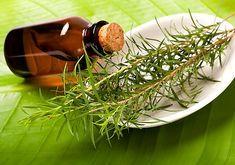 A teafa illóolaja az egyik legjobb természetes fertőtlenítő szer, elpusztítja a baktériumokat, a vírusokat és a gombákat, ezzel egyidejűleg megerősíti az immunrendszert.