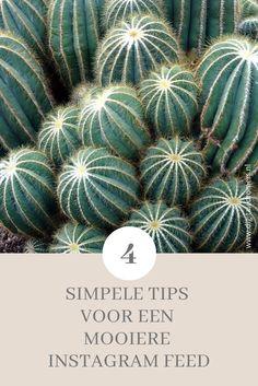 Wil je meer volgers op Instagram? Dan is een aantrekkelijke feed onmisbaar. Ontdek hier 4 simpele tips voor een perfecte Instagram feed.