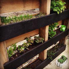 DIY Pallet Vertical Herb Garden: Hanging Planter   99 Pallets