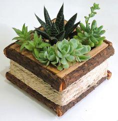 Decorar con cactus (10)