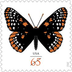 Like the Baltimore oriole, this colorful butterfly is named after George Calvert, Lord Baltimore, who helped found the colony of Maryland. The butterfly's colors resemble those on Calvert's coat of arms, with orange and white spots forming a checkered pattern on black wings. The butterfly has an unusual life cycle. It spends the winter hibernating as a caterpillar, rolled up in a fallen leaf which it uses as a sleeping bag.