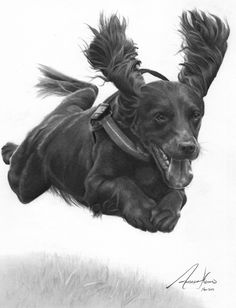 Commission - 'Flying' Cocker Spaniel by Captured-In-Pencil on DeviantArt