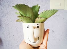 Como cuidar e montar seu cactos ou suculenta em vasos ou canecas sem furos.