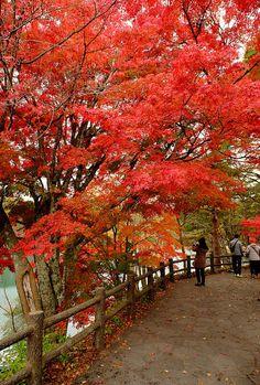 Red  leaves   by linwujin
