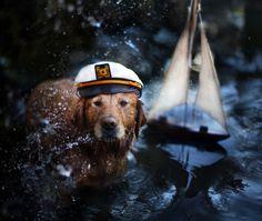 Jessica Trinh Photography - check out her dog photos