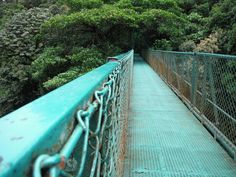 50 things to do in Costa Rica - the hanging bridges in Monteverde are one of the most popular activities in the cloud forest since you get amazing views and you can see lots of wildlife