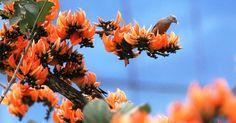 আজ বসন্ত: রংয়ের মেলা প্রকৃতিতে - http://paathok.news/18272