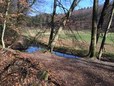 Nettetal Forrest near Osnabrück, Germany