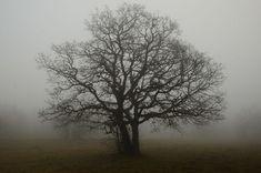 Tree, Branches, Fog, Solitude