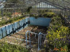Abandoned swimming pool -- appears to have once been an indoor swimming pool, judging from the greenhouse-like structure over it.