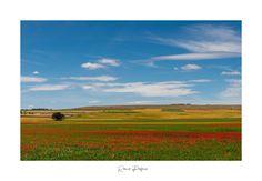 I colori della murgia. Ph Rocco Pedone. Ph, Golf Courses, Mountains, Digital, Nature, Travel, Fotografia, Naturaleza, Viajes