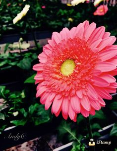 Blooming pink!