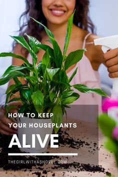 Do you struggle with keeping your indoor plants alive? Check out this list of tips to keep your houseplant alive and go from a plant killer to a plant hoarder! #plantkiller #planthoarder Houseplant Care Tips | Indoor Plant Care Tips | Houseplant Care | Beginner Houseplants | Indoor Plant Care | Beginner Indoor Plants | How to Keep Houseplants Alive | How to Keep Indoor Plants Alive | Best Indoor Plants, Air Plants, House Plants Decor, Plant Decor, Crescent Recipes, All About Plants, Apartment Plants, Low Light Plants, Plant Identification