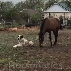 Look at them play how sweet cute funny animals, cute baby animals, funny animal Cute Funny Animals, Cute Baby Animals, Funny Dogs, Animals And Pets, Cute Dogs, Funny Kitties, Wild Animals, Adorable Kittens, Kitty Cats