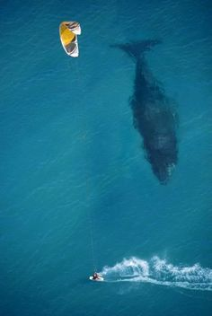 Whale Interaction.