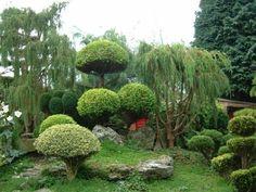 jardin japonais extravagant arbres sculptés