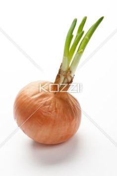 growing onion - An onion growing new shoots on a white background