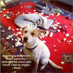 badrosie.. greatest website ever. Dog shaming