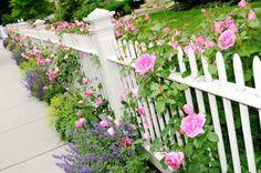 Cả Lối đi như dẫn vào thiên đường mộng mơ khi có thêm tường hàng rào trắng tinh khôi
