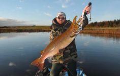 Beautiful salmon fished in Ireland