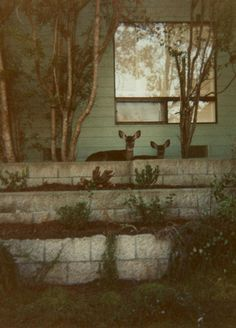 deer. just chillin.