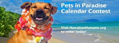 Paws On The Path: Aiea Loop Trail - http://fullofevents.com/hawaii/event/paws-on-the-path-aiea-loop-trail/