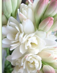 Tuberose, oh how sweet!  Plant near a window or a space that you'll be spending time.