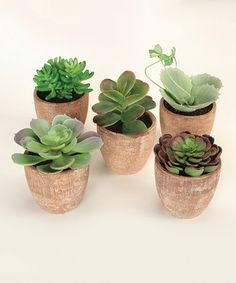 This Potted Succulent Arrangement Set is perfect! $60.00 on #zulilyfinds