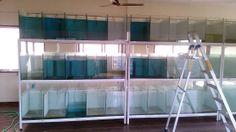 fish breeding setup Aquarium Terrarium, Discus Aquarium, Discus Fish, Saltwater Aquarium, Freshwater Aquarium, Aquarium Store, Diy Aquarium, Aquarium Design, Fish Tank Design