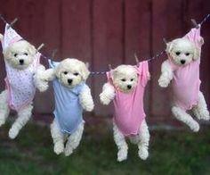 ..1 puppy..2 puppy..3 puppy..4!!..