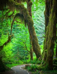 Hoh Rainforest, Olympic Peninsula in Western Washington State