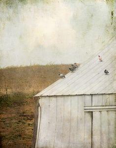 bird's eye view-Jamie Heiden