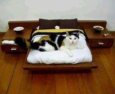 30 Best Stuff images | Dog cat, Pet beds, Pets
