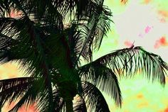Painted Palms 1 Photograph by Maria Keady
