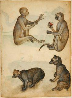 Lombardischer Meister (Meister des Tiermusterbuches von Weimar), Zwei Affen und Braunbären, um 1400, Pinsel in Braun, Weiß, Rot und Blau