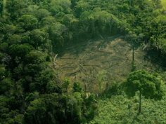 Conflicting Data: How Fast Is the World Losing its Forests? Global Awareness, Amazon Rainforest, Environmentalist, World's Biggest, Global Warming, Pacific Northwest, Climate Change, Forests, Farming