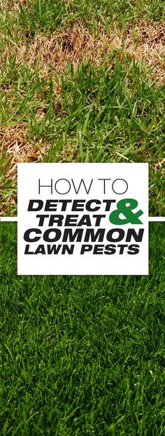 How to Detect and Treat Common Lawn Pests || This article is all about the various pests that threaten your grass. #lawncare