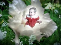 new baby flowers and gifts New Baby Flowers, Flower Delivery, New Baby Products, Bouquet, Christmas Ornaments, Holiday Decor, Gifts, Beautiful, Presents