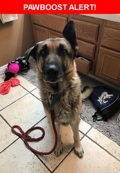 Is this your lost pet? Found in North Las Vegas, NV 89032. Please spread the word so we can find the owner!    Nearest Address: Near Dove Creek Rd & Peaceful Path Ct