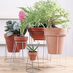 If, like me, you enjoy browsing secondhand stores you'll know that you can pick up lampshades for practically nothing. This project shows how to use old lampshade wire frames to make trendy plant stands.
