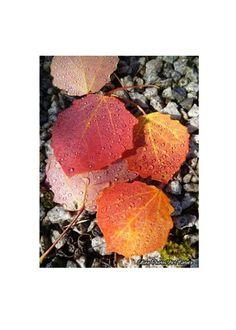 Poster 80x60cm à partir d'une photographie de Céline Photos Art Nature de feuilles d'automne. : Photos par celinephotosartnature Celine, Posters, Nature, Photos, Etsy, Art, Pencil Drawings, Leaves, Handmade Gifts